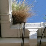 gutter cleaning with grass